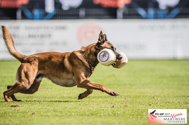 WK_2019_Oostenrijk-2.png